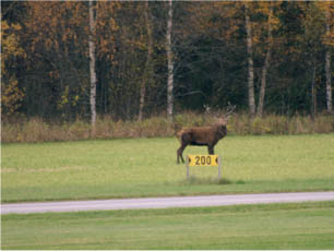 airpark wildlife