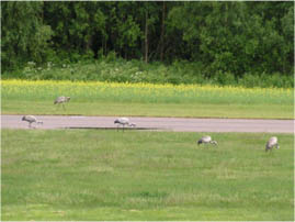 birds airpark